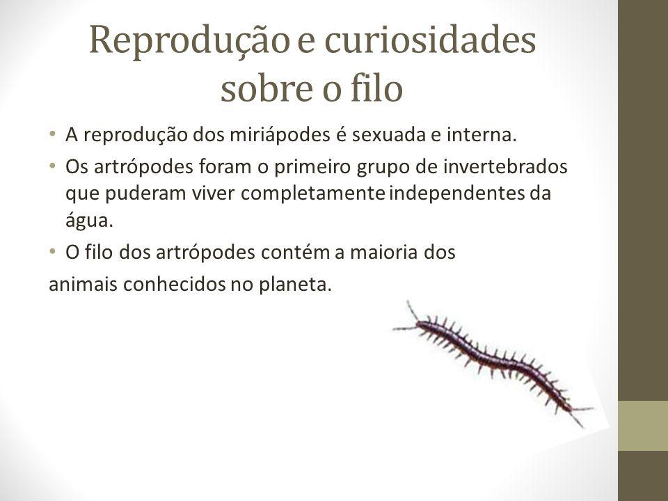 Reprodução e curiosidades sobre o filo A reprodução dos miriápodes é sexuada e interna. Os artrópodes foram o primeiro grupo de invertebrados que pude