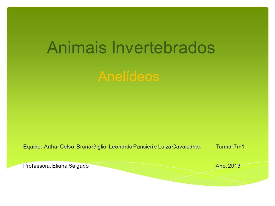 Animais Invertebrados Anelídeos Equipe: Arthur Celso, Bruna Giglio, Leonardo Pancieri e Luiza Cavalcante.