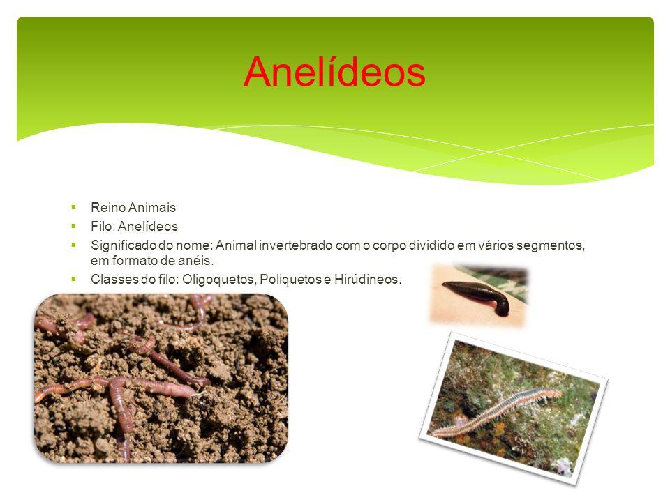 Reino Animais Filo: Anelídeos Significado do nome: Animal invertebrado com o corpo dividido em vários segmentos, em formato de anéis.