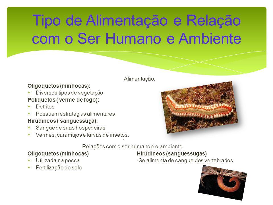 Alimentação: Oligoquetos (minhocas): Diversos tipos de vegetação Poliquetos ( verme de fogo): Detritos Possuem estratégias alimentares Hirúdineos ( sanguessuga): Sangue de suas hospedeiras Vermes, caramujos e larvas de insetos.