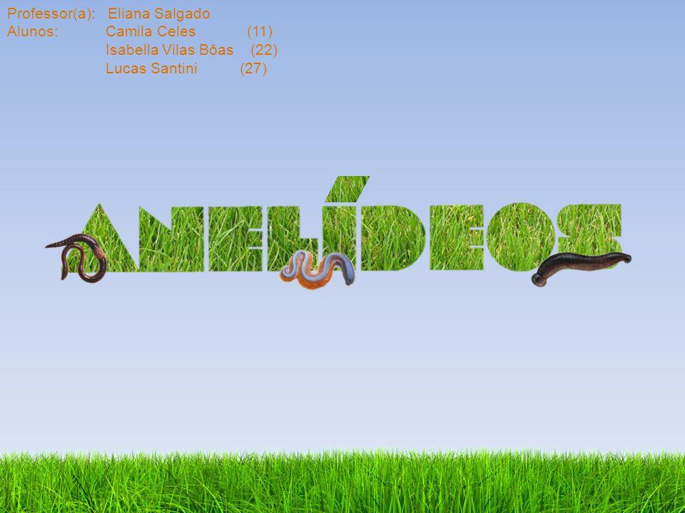 Os anelídeos Filo: Annelida Reino: Animalia.