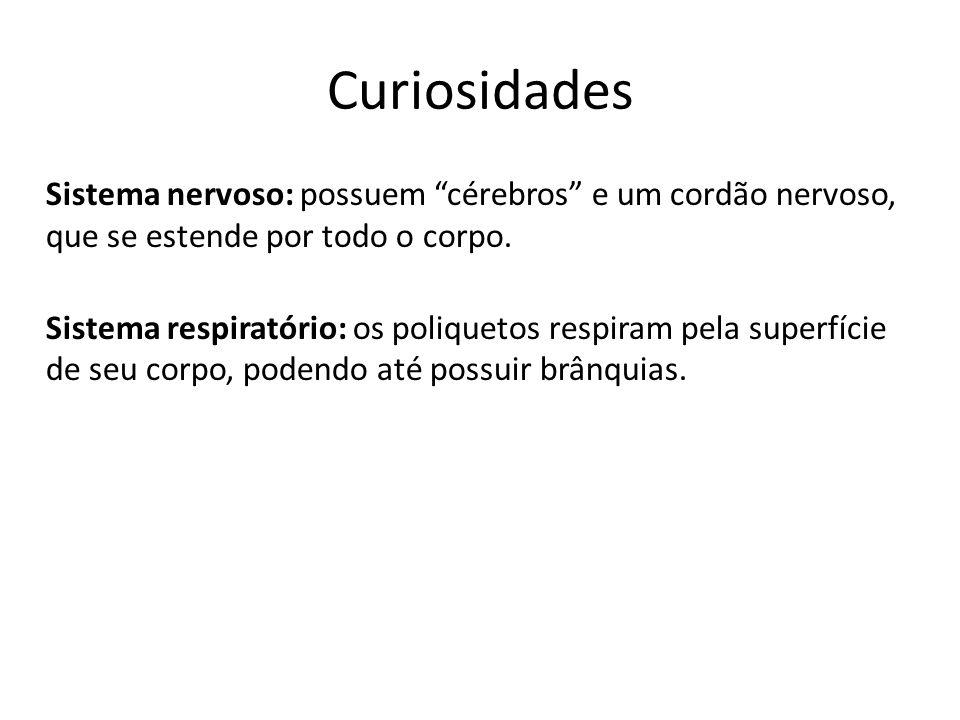 Curiosidades Sistema nervoso: possuem cérebros e um cordão nervoso, que se estende por todo o corpo. Sistema respiratório: os poliquetos respiram pela