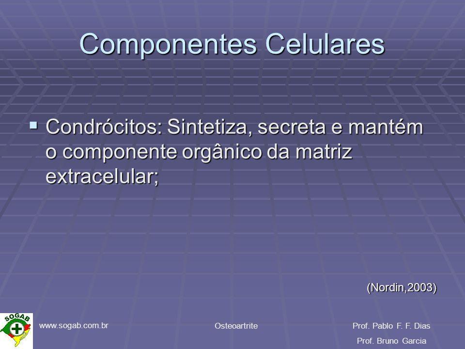 www.sogab.com.br OsteoartriteProf. Pablo F. F. Dias Prof. Bruno Garcia Componentes Celulares Condrócitos: Sintetiza, secreta e mantém o componente org