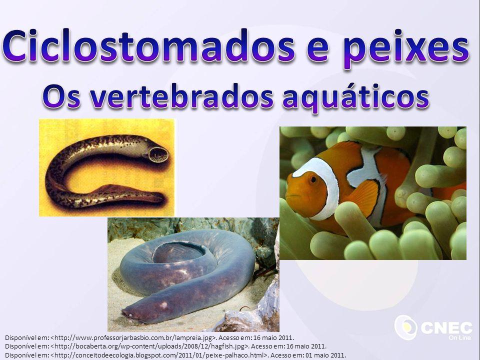 Reprodução Dioicos Fecundação externa Desenvolvimento indireto Larva: alevino Saco vitelínico (nos osteíctes e nos condríctes) Disponível em:.