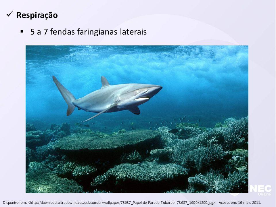 Respiração 5 a 7 fendas faringianas laterais Disponível em:. Acesso em: 16 maio 2011.