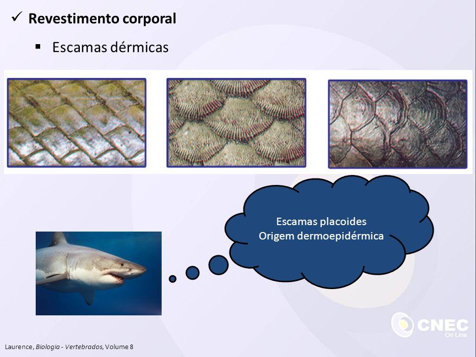 Revestimento corporal Escamas dérmicas Laurence, Biologia - Vertebrados, Volume 8 Escamas placoides Origem dermoepidérmica