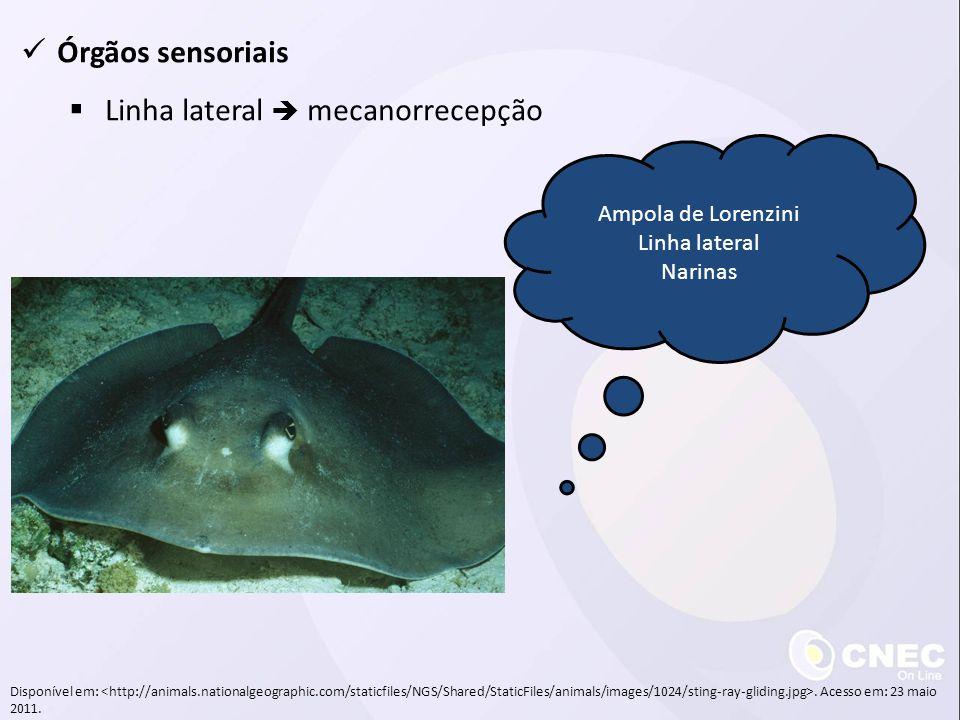 Órgãos sensoriais Linha lateral mecanorrecepção Ampola de Lorenzini Linha lateral Narinas Disponível em:. Acesso em: 23 maio 2011.
