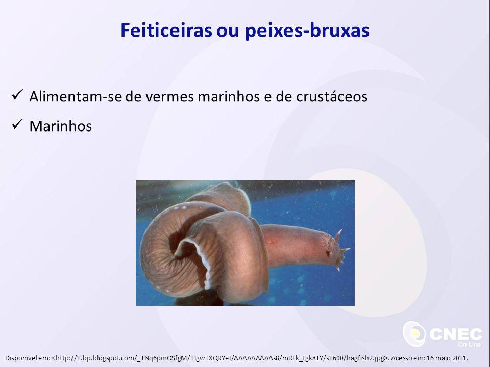 Feiticeiras ou peixes-bruxas Alimentam-se de vermes marinhos e de crustáceos Marinhos Disponível em:. Acesso em: 16 maio 2011.