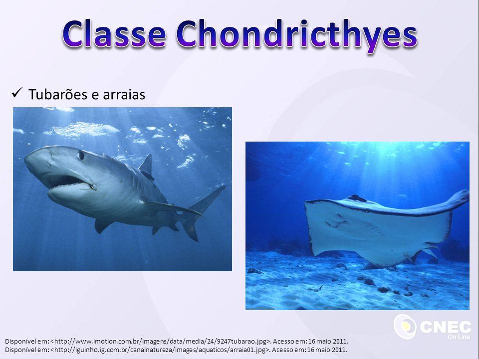 Tubarões e arraias Disponível em:. Acesso em: 16 maio 2011.