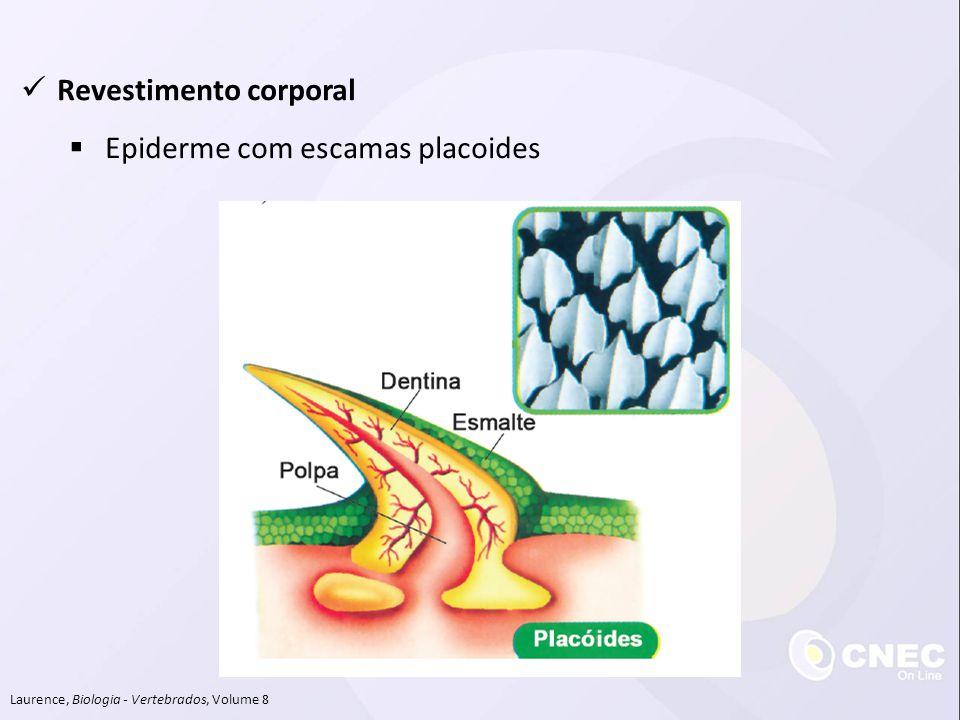 Revestimento corporal Epiderme com escamas placoides Laurence, Biologia - Vertebrados, Volume 8