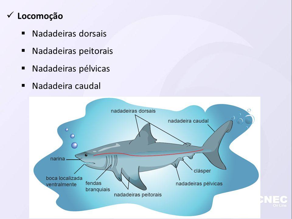 Alimentação Boca anteroventral Fileira de dentes pontiagudos Válvula espiral Disponível em:.
