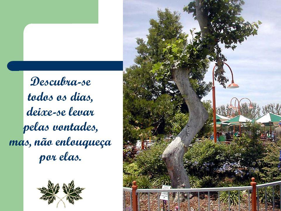 Créditos Formatação: Vinna Mara Magalhães Texto: Fernando Pessoa Música: The Memory of Trees – Enya Compositor: Roma Ryan Imagens: Arquivo Pessoal Contato: vinnamara@yahoo.com.br