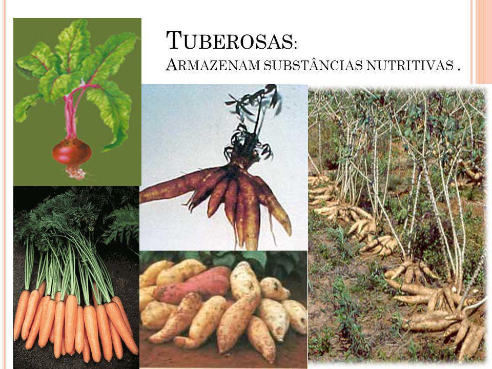 T UBEROSAS : A RMAZENAM SUBSTÂNCIAS NUTRITIVAS.