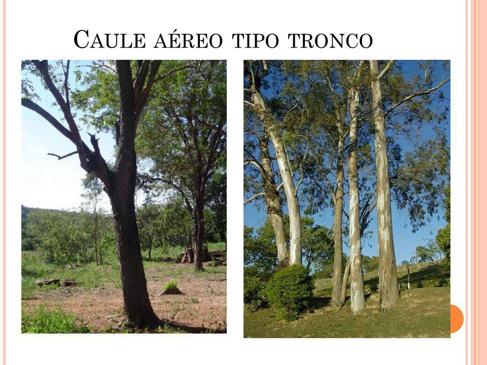 C AULE AÉREO TIPO TRONCO