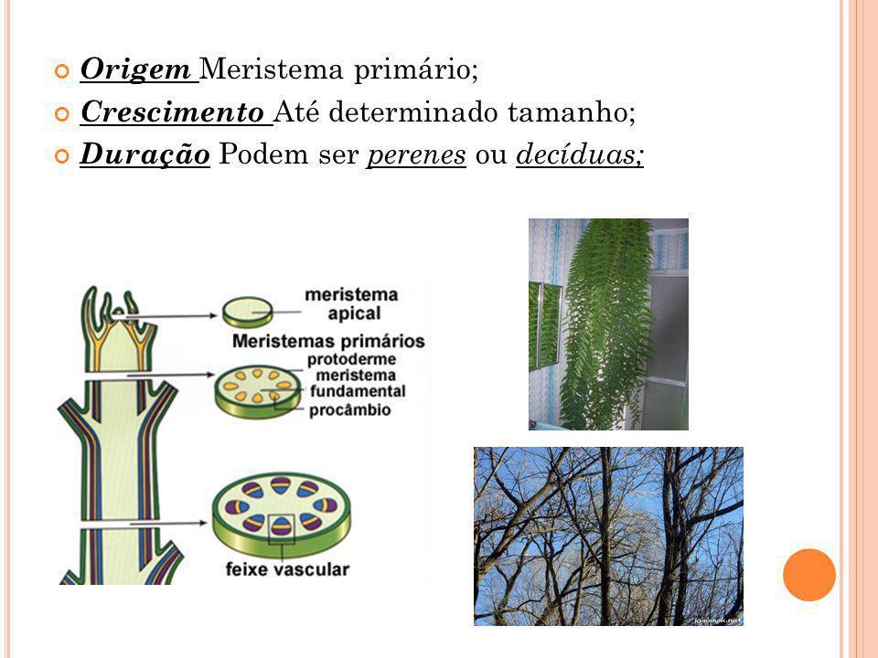 Origem Meristema primário; Crescimento Até determinado tamanho; Duração Podem ser perenes ou decíduas;