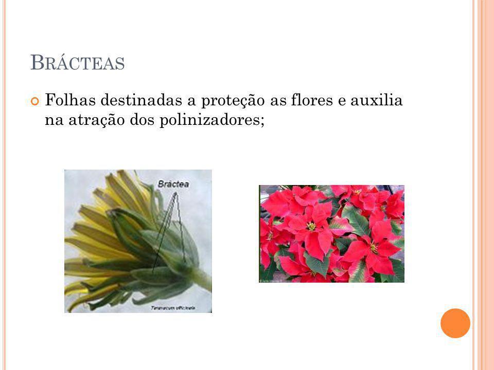 B RÁCTEAS Folhas destinadas a proteção as flores e auxilia na atração dos polinizadores;