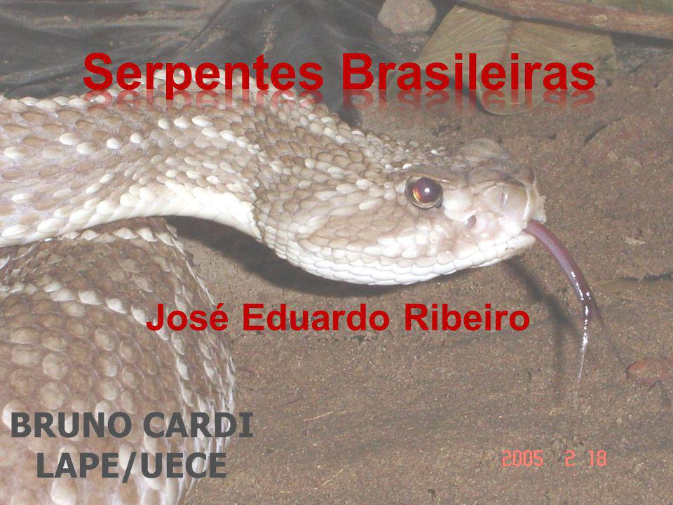 José Eduardo Ribeiro