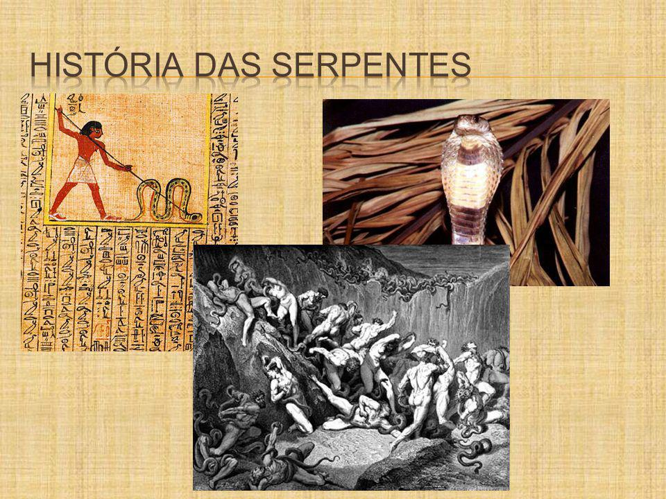 FAMÍLIA COLUBRIDAE 2/3 das serpentes do mundo 2/3 das serpentes do mundo Philodryas olfersii Clelia clelia Elapomorphus mertensi