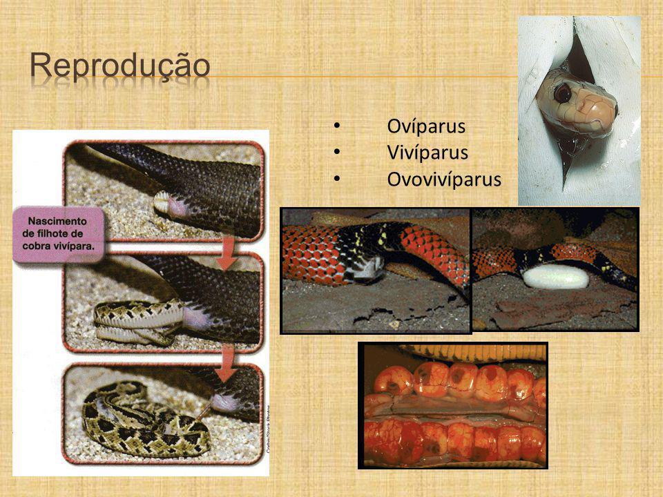 Ovíparus Vivíparus Ovovivíparus