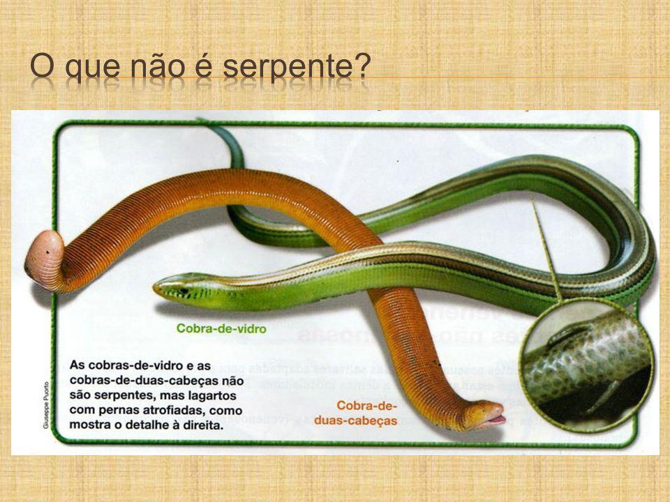 SERPENTES CONSIDERADAS NÃO PEÇONHENTAS Acidente com Philodryas olfersii Acidente com Boa constrictor