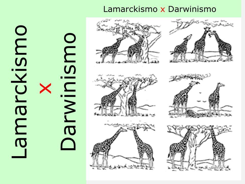 DARWINISMO AS POPULAÇÕES NATURAIS DE TODAS AS ESPÉCIES TENDEM A CRESCER RAPIDAMENTE. O AMBIENTE TENDE A LIMITAR O NÚMERO DE INDIVÍDUOS EM CADA POPULAÇ