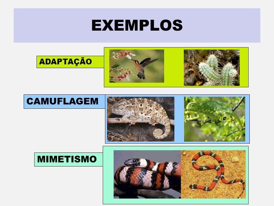 SABER ISTO É IMPORTANTE ADAPTAÇÃO É o ajustamento que todos os organismos apresentam em relação ao ambiente em que vive. CAMUFLAGEM Quando a espécie r
