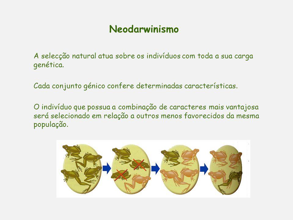 Neodarwinismo Causas de variabilidade genética: 1 – As mutações são a fonte primária da variabilidade. Ao longo das gerações, vai-se verificando nas p