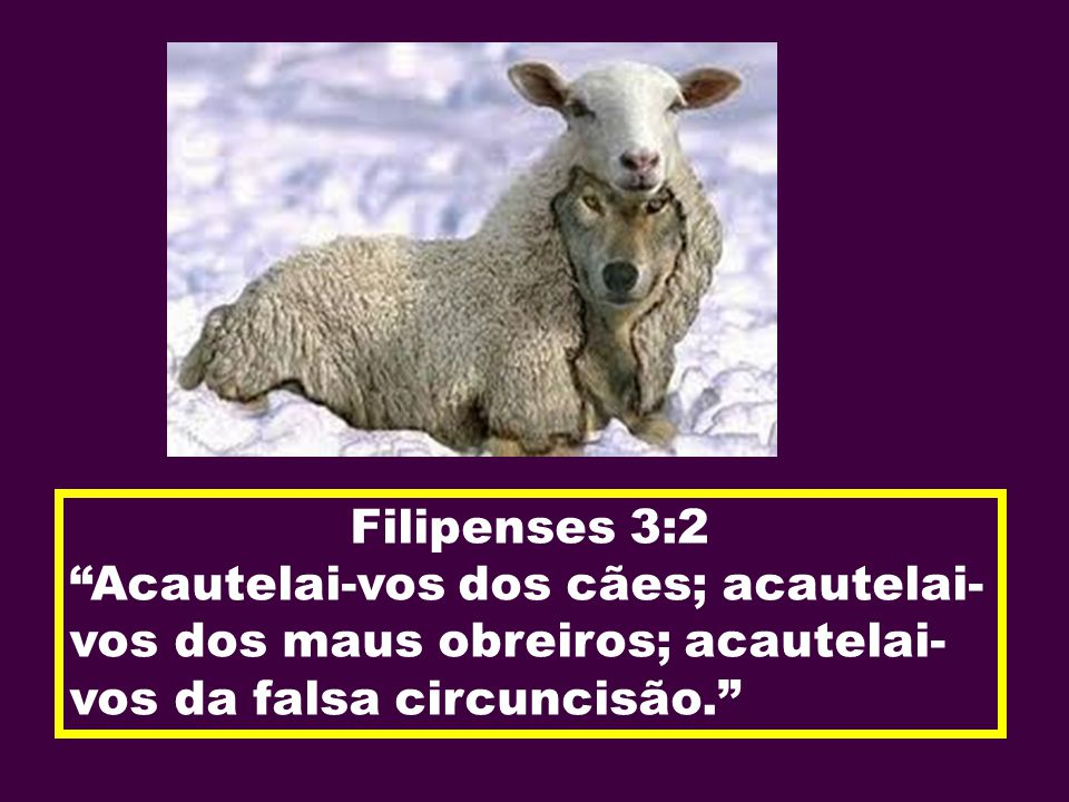 Filipenses 3:2 Acautelai-vos dos cães; acautelai- vos dos maus obreiros; acautelai- vos da falsa circuncisão.