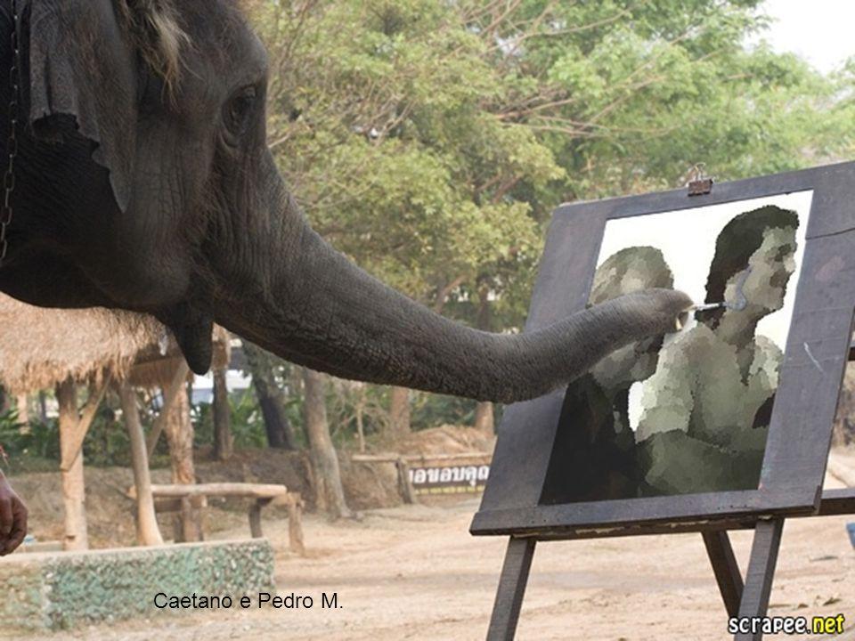 O elefantinho Vinícius de Moraes Onde vais, elefantinho Correndo pelo caminho Assim tão desconsolado.