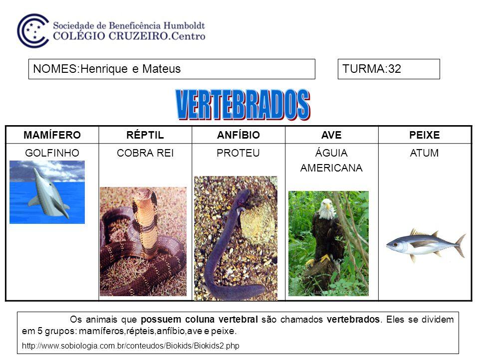 MAMÍFERORÉPTILANFÍBIOAVEPEIXE ORCACOBRA-REIPERERECAGATURAMOBAN DEIRA PEIXE- PALHAÇO NOMES:Letícia e ClaraTURMA:32 Um dos componentes do esqueleto desses animais é a coluna vertebral.
