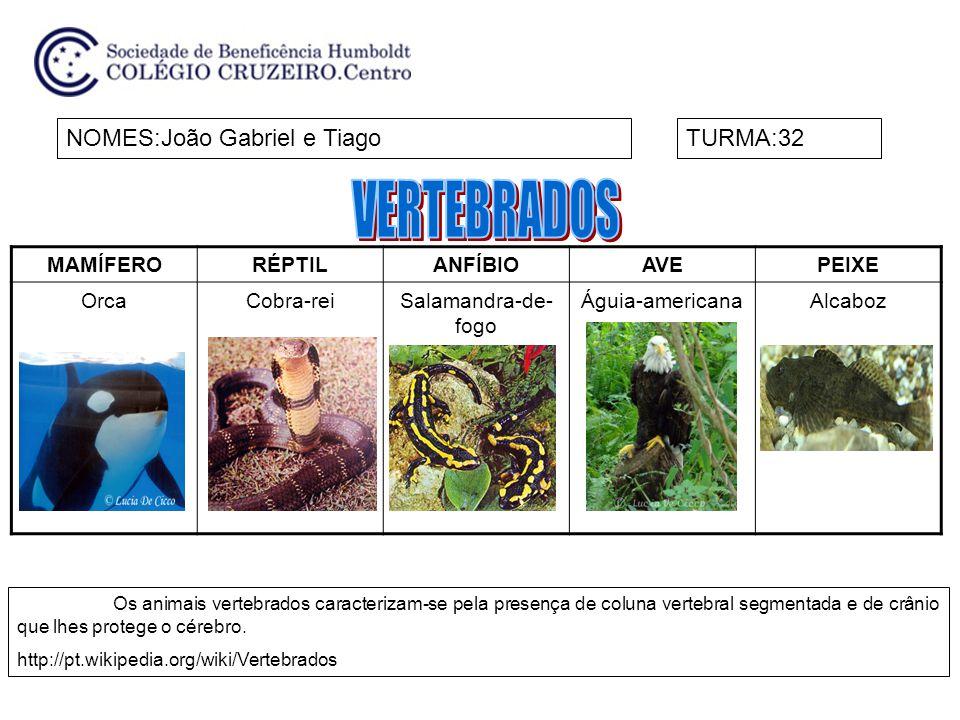 MAMÍFERORÉPTILANFÍBIOAVEPEIXE FOCA-DA- GROENLÂNDIA COBRA D`ÁGUATRITÃOPAVÃOCAVALO-MARINHO NOMES:Luiza e NinaTURMA:32 Os animais que têm uma coluna vertebral são chamados de vertebrados.