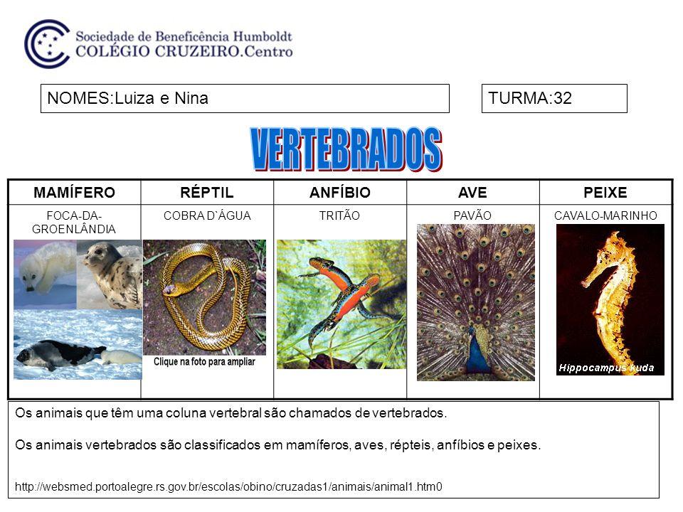NOMES:AlessandroTURMA:32 Invertebrados: ausência de espinha dorsal http://www.todabiologia.com/zoologia/animais_invertebrados.htm