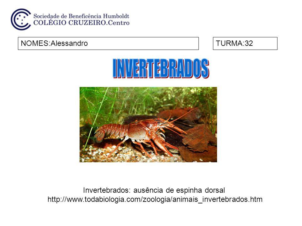 NOMES: Guilherme Hasse e João Pedro Jahara DiasTURMA:32 Chamamos de invertebrados os animais que não possuem coluna vertebral nem crânio.