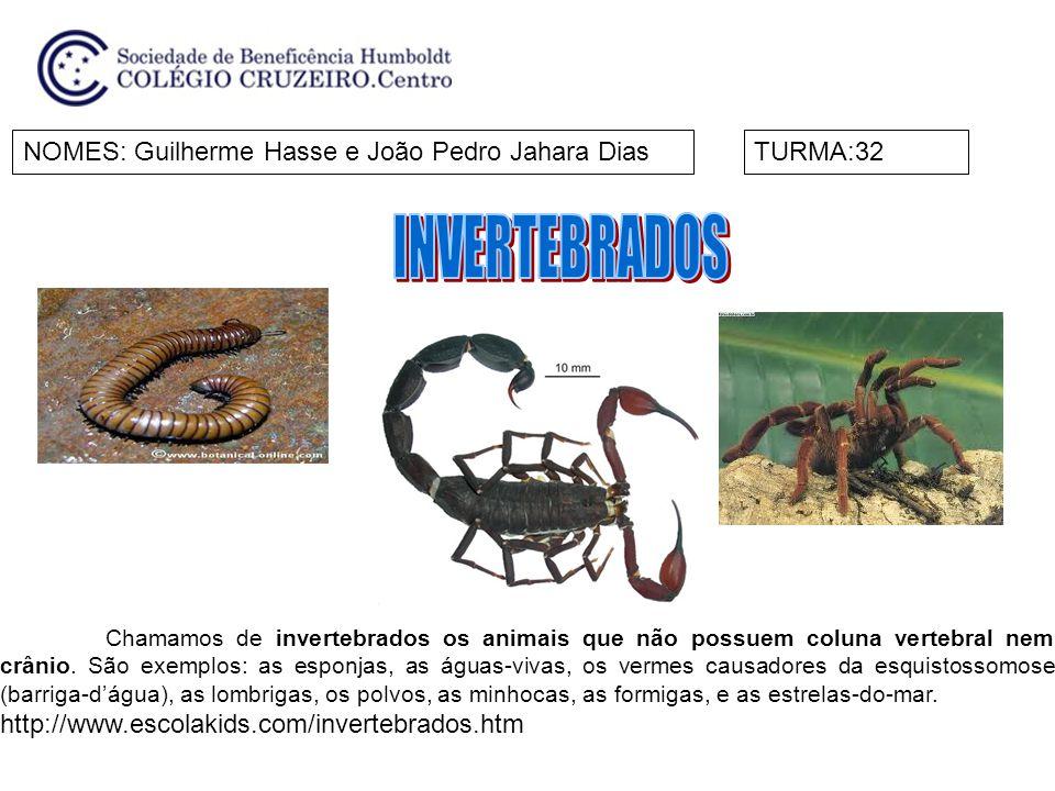 NOMES:Lara e LiviaTURMA:32 Chamamos de invertebrados os animais que não possuem coluna vertebral nem crânio.