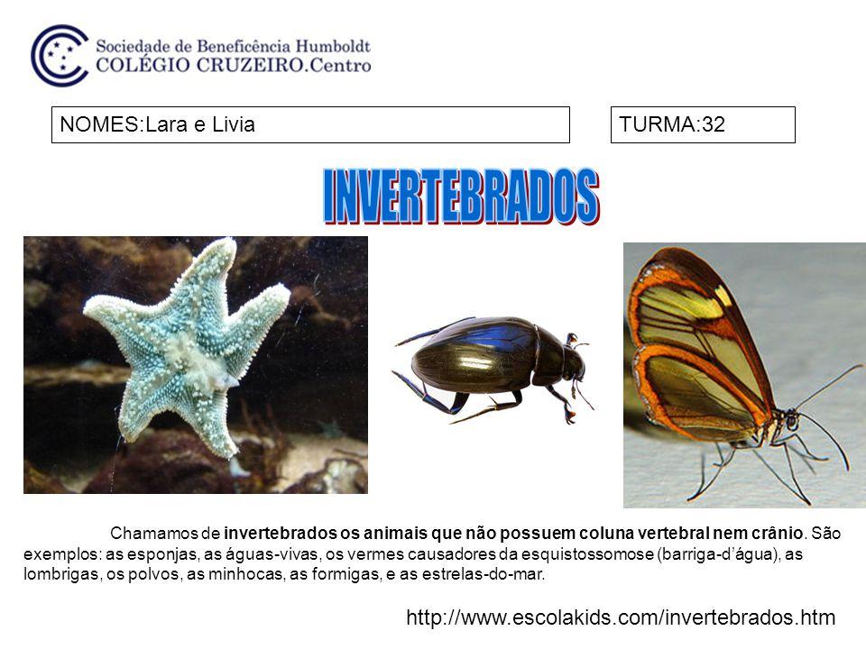 NOMES :Davi e Maria ManuellaTURMA:32 Invertebrados: ausência de espinha dorsal.