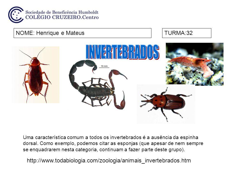 NOMES:Laura e Maria Fernanda TavaresTURMA:32 Chamamos de invertebrados os animais que não possuem coluna vertebral nem crânio.