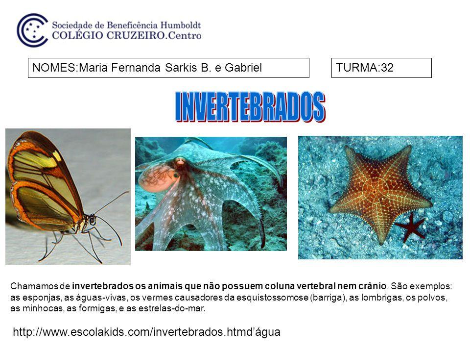 NOMES:Clara e LetíciaTURMA:32 Chamamos de invertebrados os animais que não possuem coluna vertebral nem crânio.