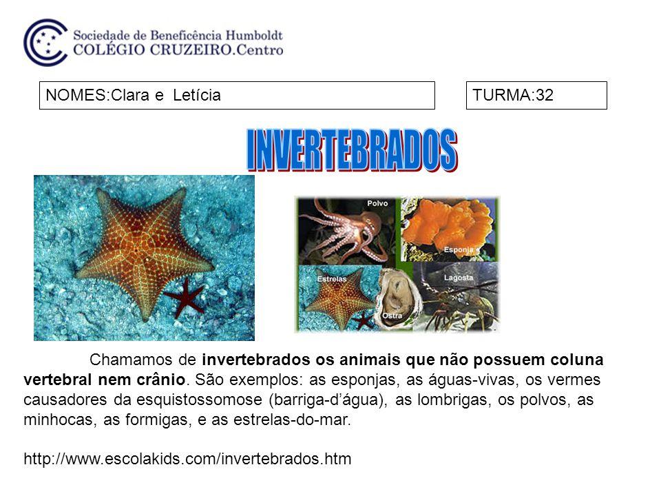 NOMES:Amanda e GabriellaTURMA:32 Chamamos de invertebrados os animais que não possuem coluna vertebral nem crânio.