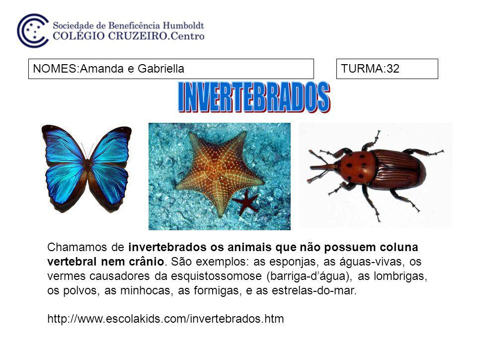 NOMES:João Gabriel e TiagoTURMA:32 Os animais que não possuem coluna vertebral são invertebrados.