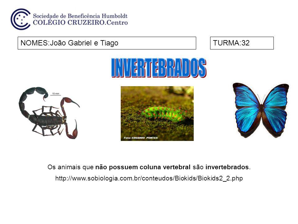NOME:Luiza e NinaTURMA:32 Chamamos de invertebrados os animais que não possuem coluna vertebral nem crânio.