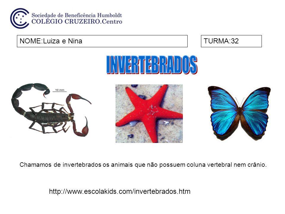 NOME:Luiza e NinaTURMA:32 Chamamos de invertebrados os animais que não possuem coluna vertebral nem crânio. http://www.escolakids.com/invertebrados.ht