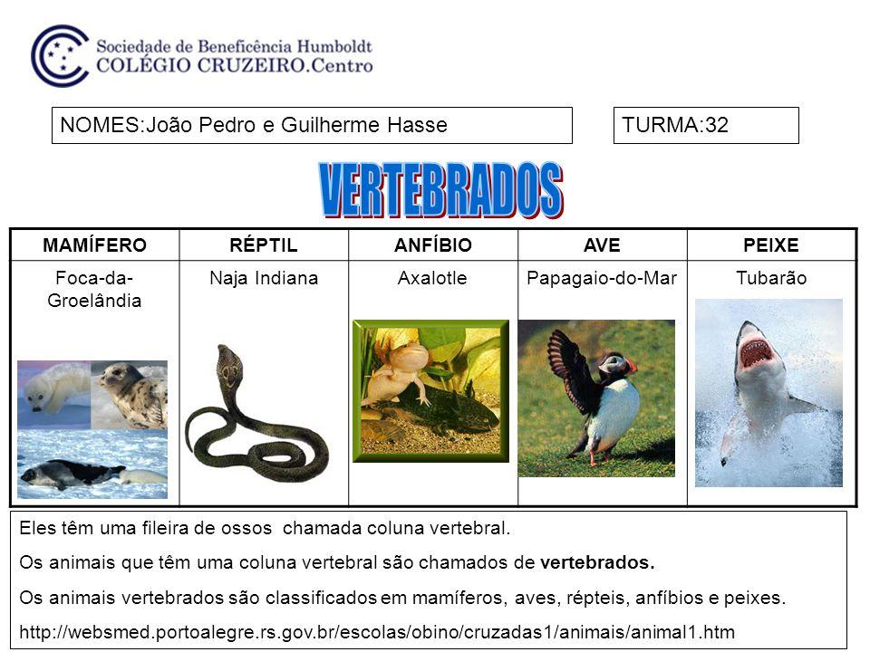 MAMÍFERORÉPTILANFÍBIOAVEPEIXE CÃO CANTOR DA NOVA GUINÉ COBRA -VERDETRITÃOARARINHA - AZUL CARPA NOMES:Maria Fernanda T.