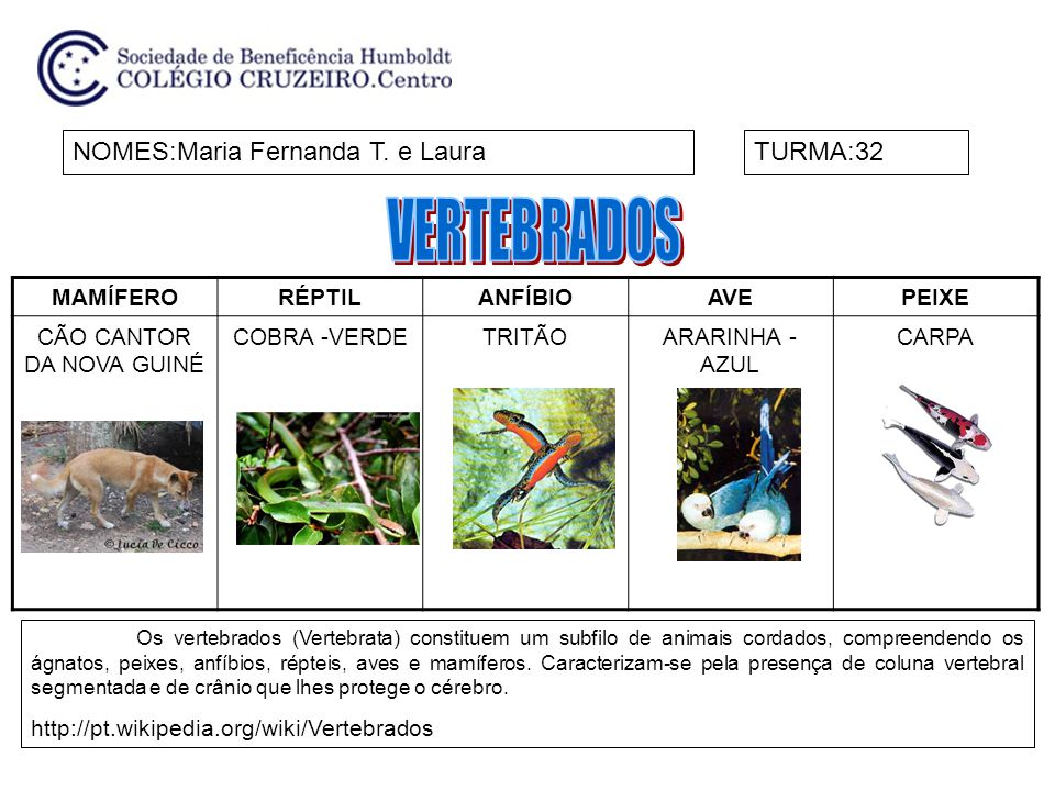MAMÍFERORÉPTILANFÍBIOAVEPEIXE Foca-da- Groelândia Jabuti piranga TritãoLoriAtum NOMES:Catherine Abadia e DanielaTURMA:32 Os vertebrados (Vertebrata) constituem um subfilo de animais cordados, compreendendo os ágnatos, peixes, anfíbios, répteis, aves e mamíferos.