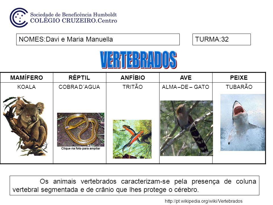 MAMÍFERORÉPTILANFÍBIOAVEPEIXE GOLFINHOCOBRA REIPROTEUÁGUIA AMERICANA ATUM NOMES:Henrique e MateusTURMA:32 Os animais que possuem coluna vertebral são chamados vertebrados.