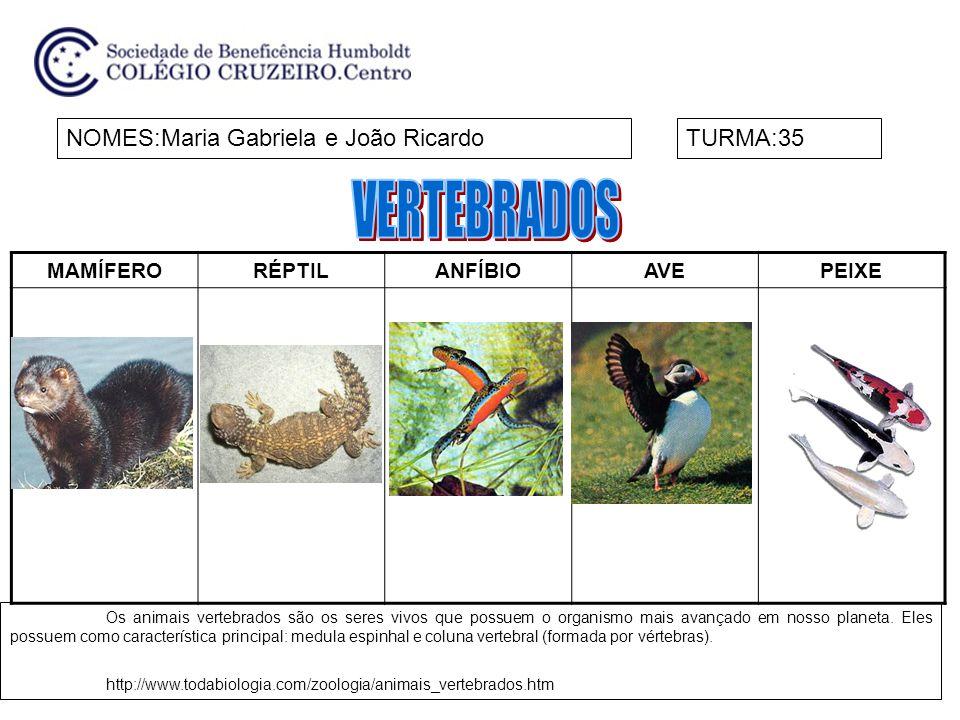 MAMÍFERORÉPTILANFÍBIOAVEPEIXE NOMES:Maria Gabriela e João RicardoTURMA:35 Os animais vertebrados são os seres vivos que possuem o organismo mais avançado em nosso planeta.