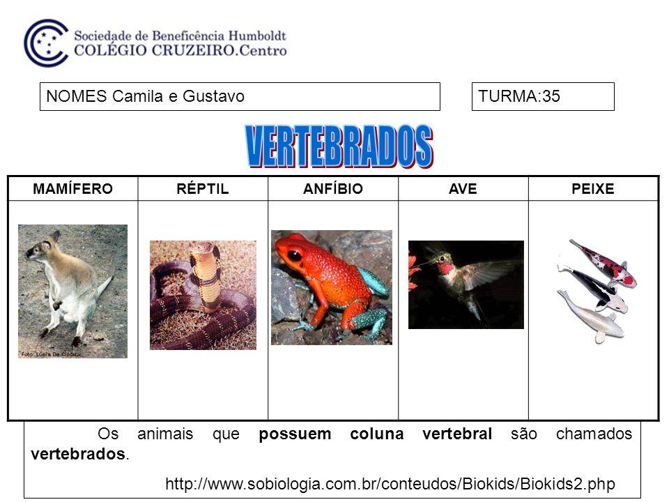 MAMÍFERORÉPTILANFÍBIOAVEPEIXE NOMES Camila e GustavoTURMA:35 Os animais que possuem coluna vertebral são chamados vertebrados.