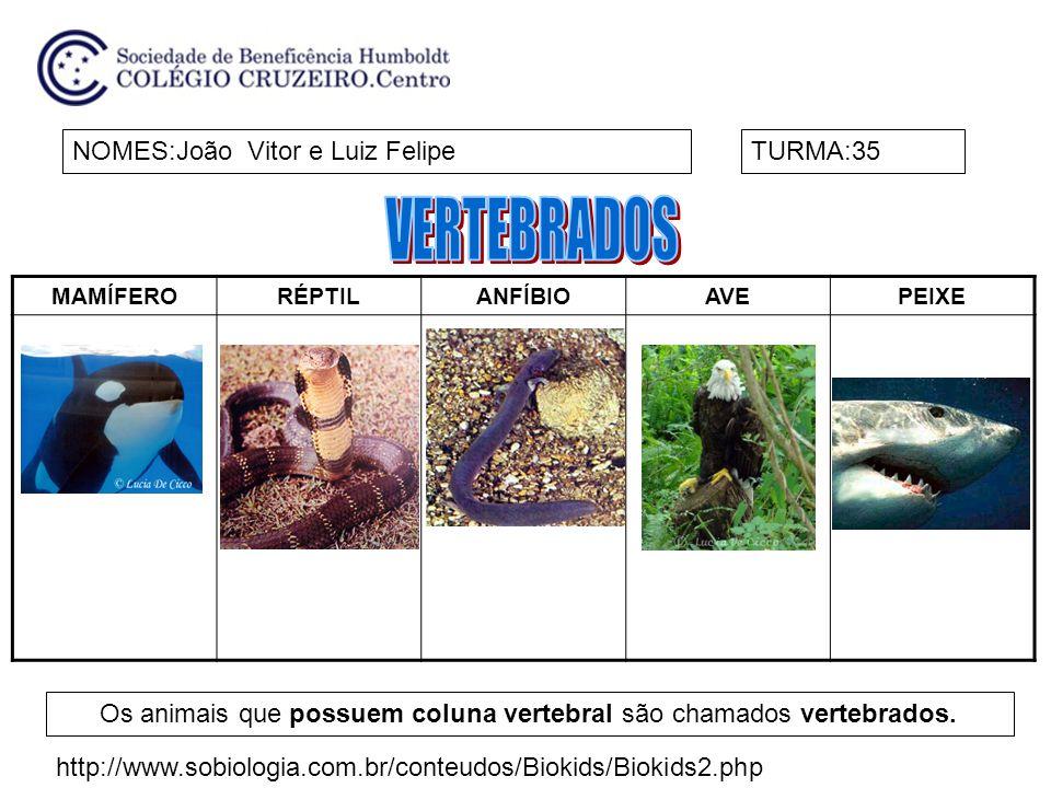 MAMÍFERORÉPTILANFÍBIOAVEPEIXE NOMES:João Vitor e Luiz FelipeTURMA:35 Os animais que possuem coluna vertebral são chamados vertebrados. http://www.sobi