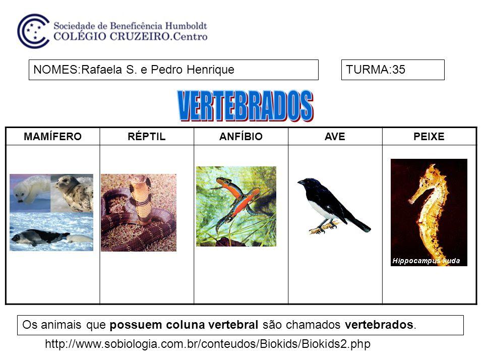 MAMÍFERORÉPTILANFÍBIOAVEPEIXE NOMES:Rafaela S. e Pedro HenriqueTURMA:35 Os animais que possuem coluna vertebral são chamados vertebrados. http://www.s