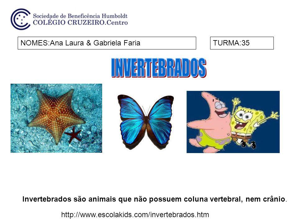 NOMES:Ana Laura & Gabriela FariaTURMA:35 Invertebrados são animais que não possuem coluna vertebral, nem crânio.