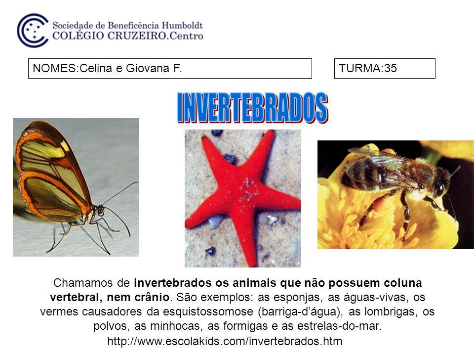 NOMES:Celina e Giovana F.TURMA:35 Chamamos de invertebrados os animais que não possuem coluna vertebral, nem crânio. São exemplos: as esponjas, as águ
